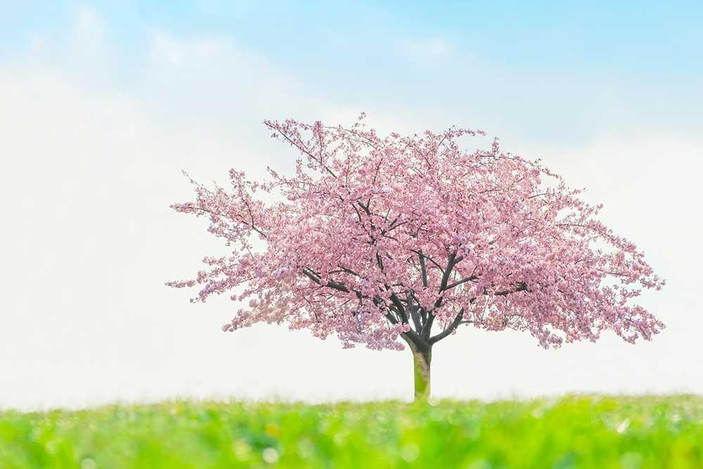 樹木葬イメージ画像