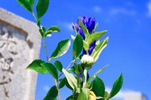 お墓・墓石用仏花イメージ画像
