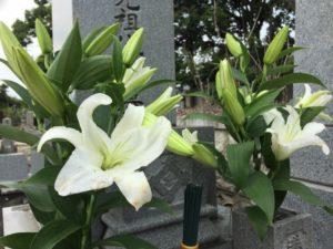 お墓のイメージ写真